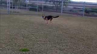 Training Basic For Any Dog