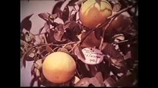 Дерево мира. ЦСДФ, 1974г., документальный.