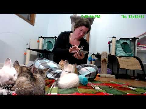 Jolene & the Country Music Kittens: 12/14/17 Visit & Weigh In