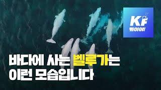 서울에서 숨진 '벨루가'…원래는 이런 동물 / KBS뉴…