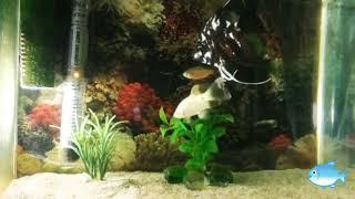 Результат. Песок в аквариуме через месяц.