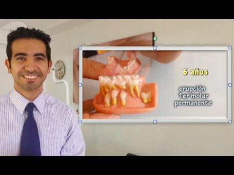 Cu ntos dientes tienen los ni os y a qu edad se caen for Suelo que se me caen los dientes