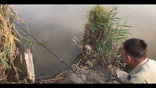 Карповая рыбалка на поплавок и на макуху на Чудесном озере