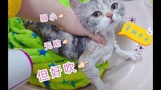 4只小奶貓被安排洗澡,完全逃不出鏟屎官的手掌心,奶兇奶兇的太萌啦!