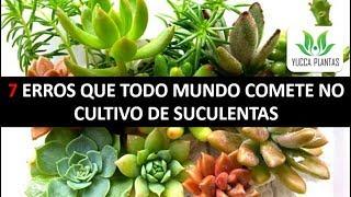 7 Erros Que Todo Mundo Comete no Cultivo de Suculentas – Aprenda a Cultivar Suculentas