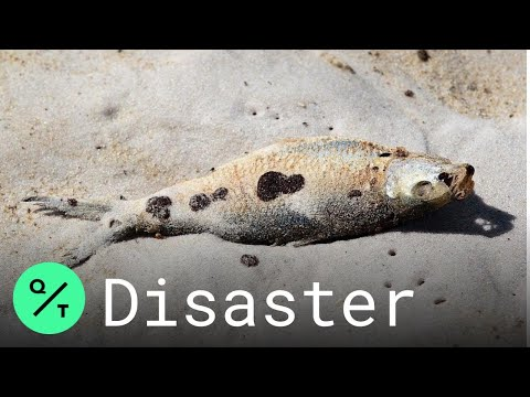 oil-pollution-found-in-fish-10-years-after-bp-oil-spill