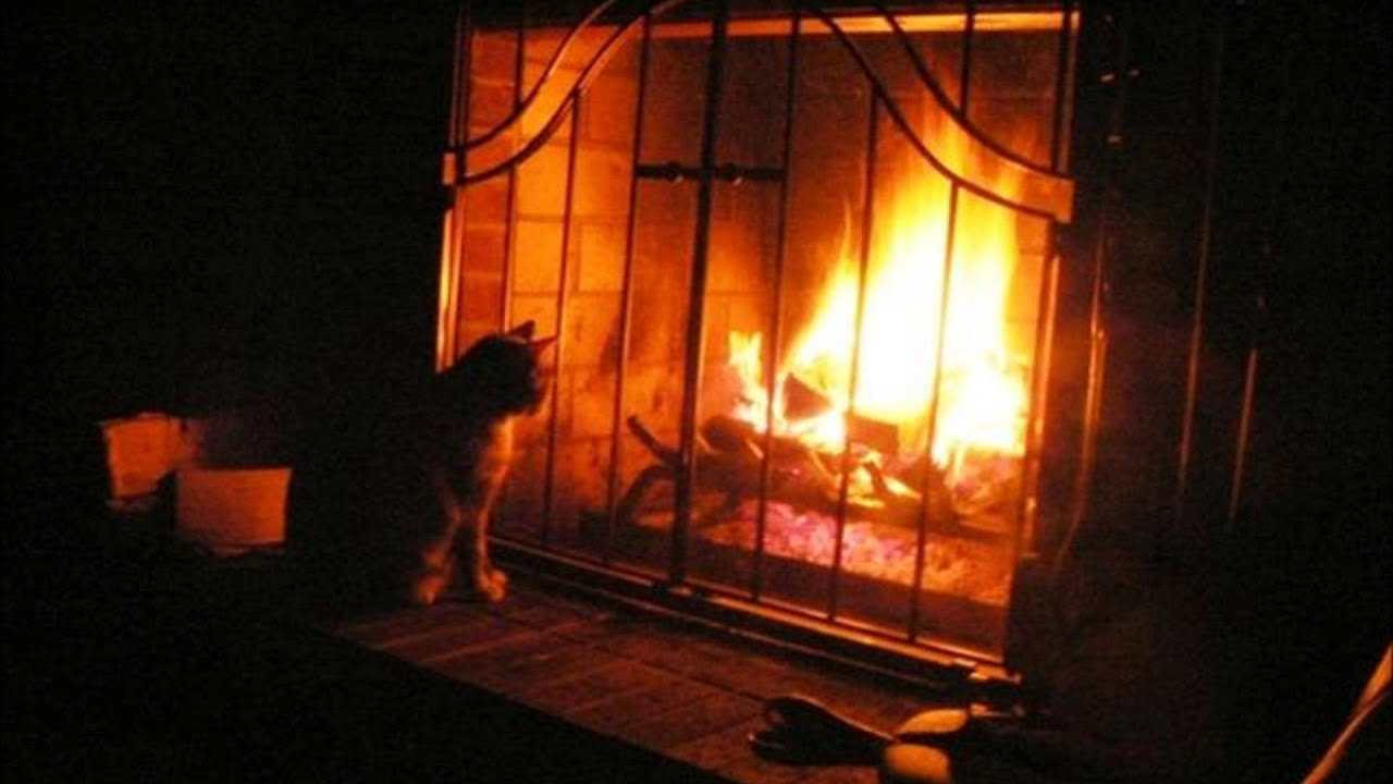 PURRING CAT NEXT TO A FIREPLACE - YouTube