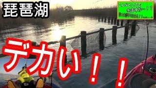 【バス釣り】マジかよ、こんなところで釣ってしまった!?やらかしたーーーサブ動画付けました。琵琶湖カヤック thumbnail