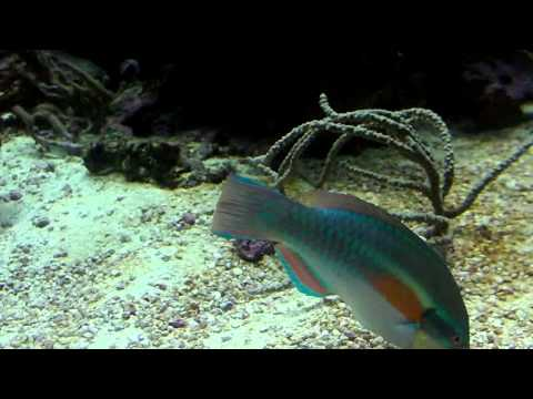 The Florida Aquarium with Rainforest Sound (2011) HD