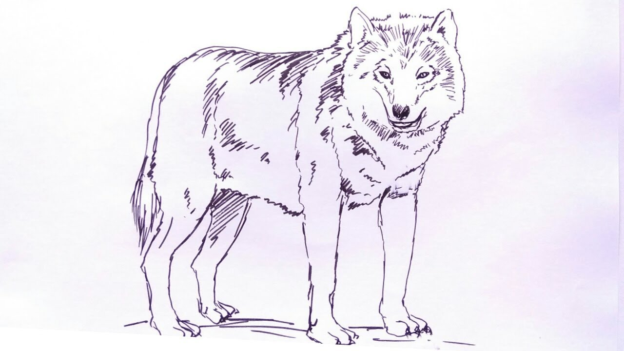 Cara Menggambar Serigala How To Draw Wolf Youtube