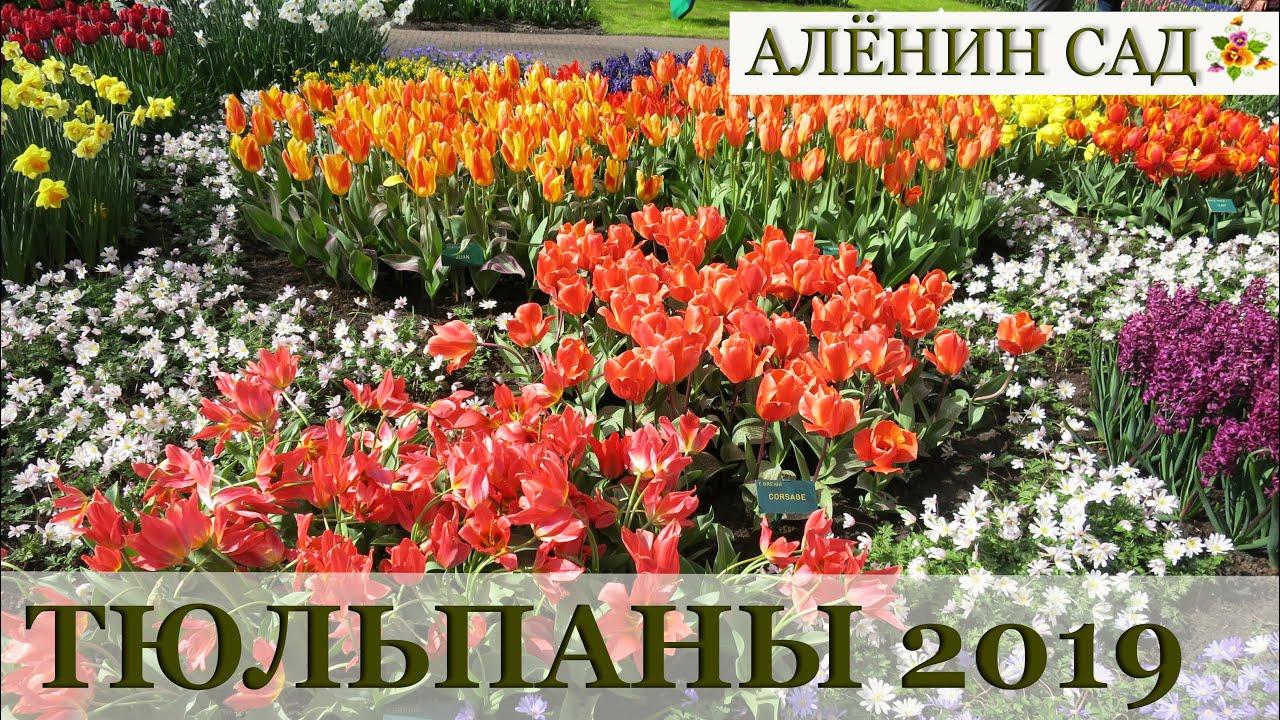 Моя БОЛЬШАЯ закупка тюльпанов и посадка с мазью Вишневского