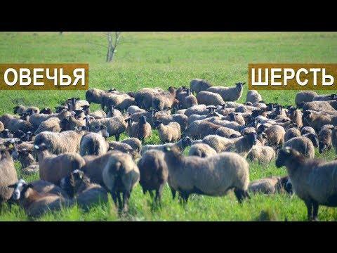 ОВЕЧЬЯ ШЕРСТЬ КУДА МОЖНО ИСПОЛЬЗОВАТЬ? Фермер Андрей Ходов