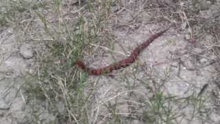 Pictures I have taken hog hunting and hiking at Lake Lavon