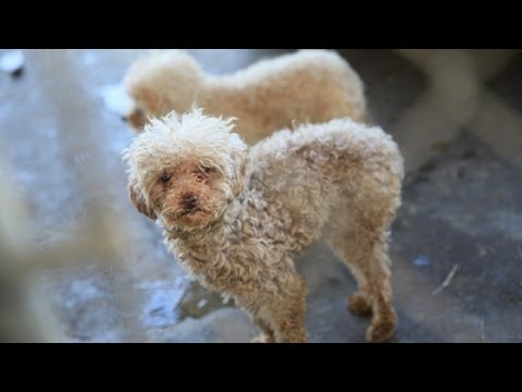 Louise's Journey -- A puppy mill story | RedRover.org