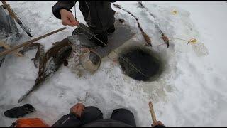 Рыбалка Осётр на Енисее 17