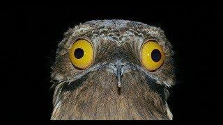 Смешные видео про животных, птиц. Приколы с животными. Я смеялся полчаса!!!