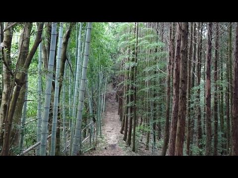HOT NEWS Yukuhashi 2017 Best Of Yukuhashi Japan Tourism
