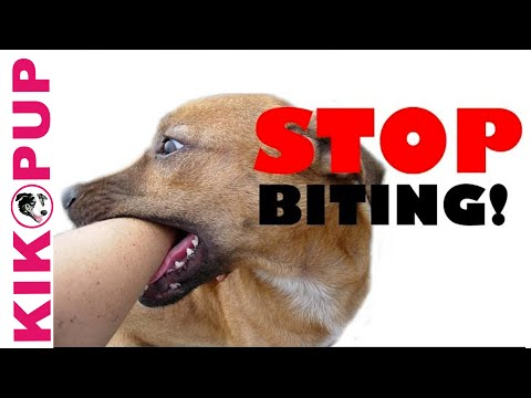 How to train your puppy not to bite