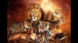 Популярные #Дикие_кошки в доме.Ягуарунди. Popular#Wildcats in the house. Jaguarundi.