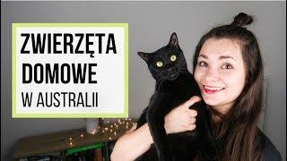 Zwierzęta domowe w Australii - koszty, przepisy, ciekawostki
