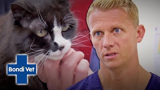 Crazy Cat Man's Cat, Moggy Is Extremely Underweight! | Full Episode | Bondi Vet