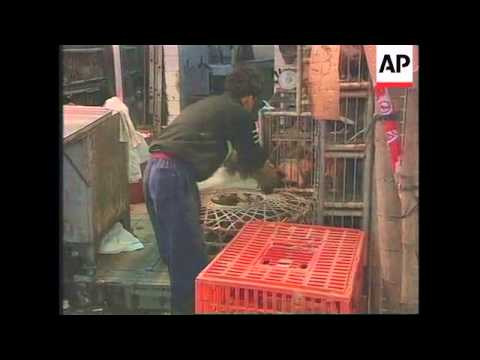 HONG KONG: WHO TO DEVELOP VACCINE TO NEW BIRD FLU