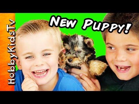 HobbyKids Get New Puppy! Surprise Egg, Dog Toys + Poop Patrol HobbyKidsTV