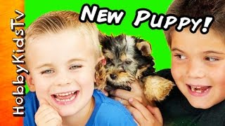 HobbyKids Get New Puppy! Surprise Egg, Dog Toys + Poop Patrol HobbyKidsTV