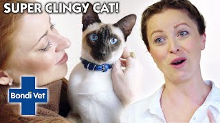 HELP! Siamese Cat Screams Over 1000 TIMES A DAY!   Full Episode   Bondi Vet