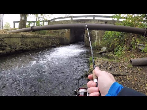 I've NEVER Seen THIS MANY TROUT! (spillway Trout Fishing)