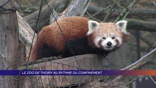 Yvelines | Le zoo de Thoiry au rythme du confinement