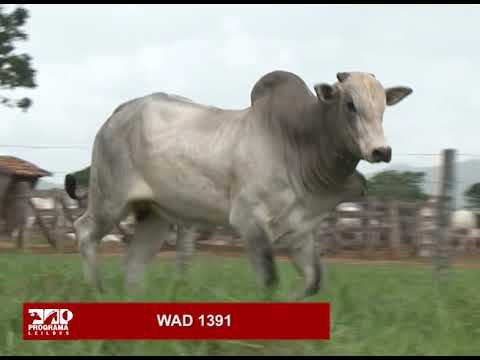 LOTE 85 - WAD 1391