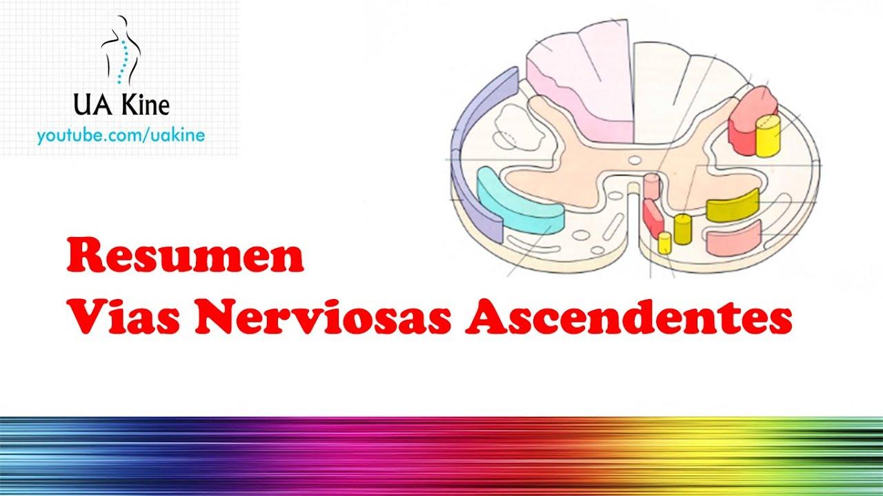 Resumen Vías Nerviosas Ascendentes (Tractos) - YouTube