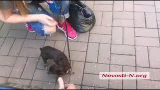 Видео Новости-N: собака не ест сосиски