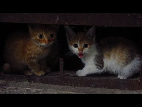 Kittens with Mother cat hide in the basement and hisses