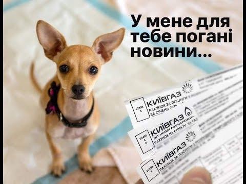 Собака за Газ   подборка смешных мемов и картинок