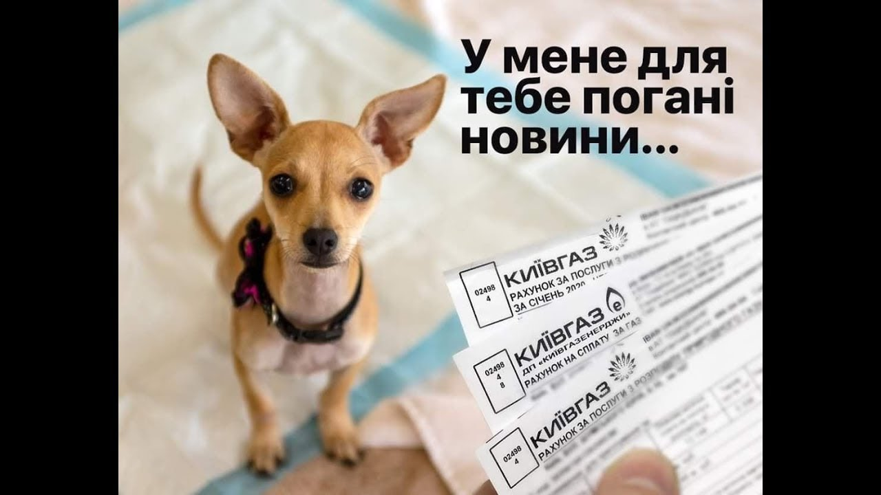 девушка у собак долги картинка конце января росздравнадзор