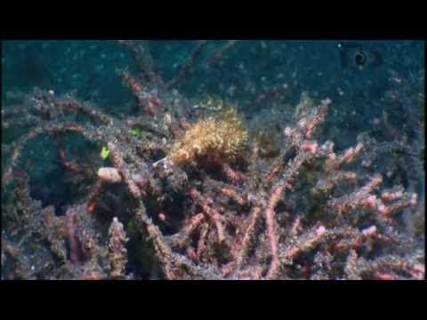 O Encanto do Azul Profundo - Ep.04: Europa | Dublado [HD] Discovery Theater
