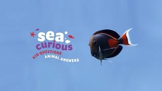 Underwater Beauty - Shedd Aquarium Livestream