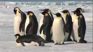 Repeat youtube video Emperor Penguins in Antarctica