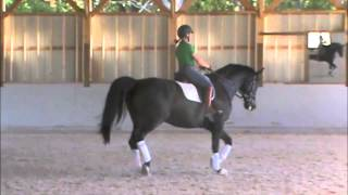 Cloverlea Dressage Sale Horse--Dillon
