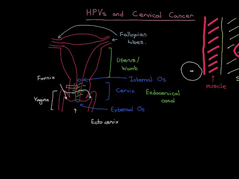 HPVs and Cervical Cancer Part 1
