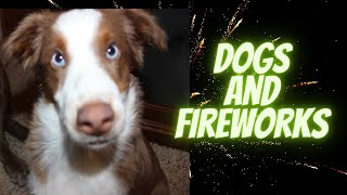 Help Your Dog Get Over Fear of Fireworks  Desensitize Your Dog to Scary Noise