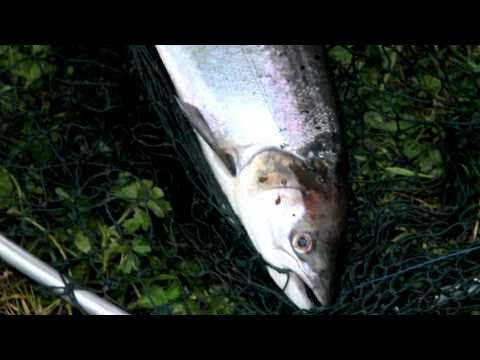 Fishing The Moy 2010 Part 1