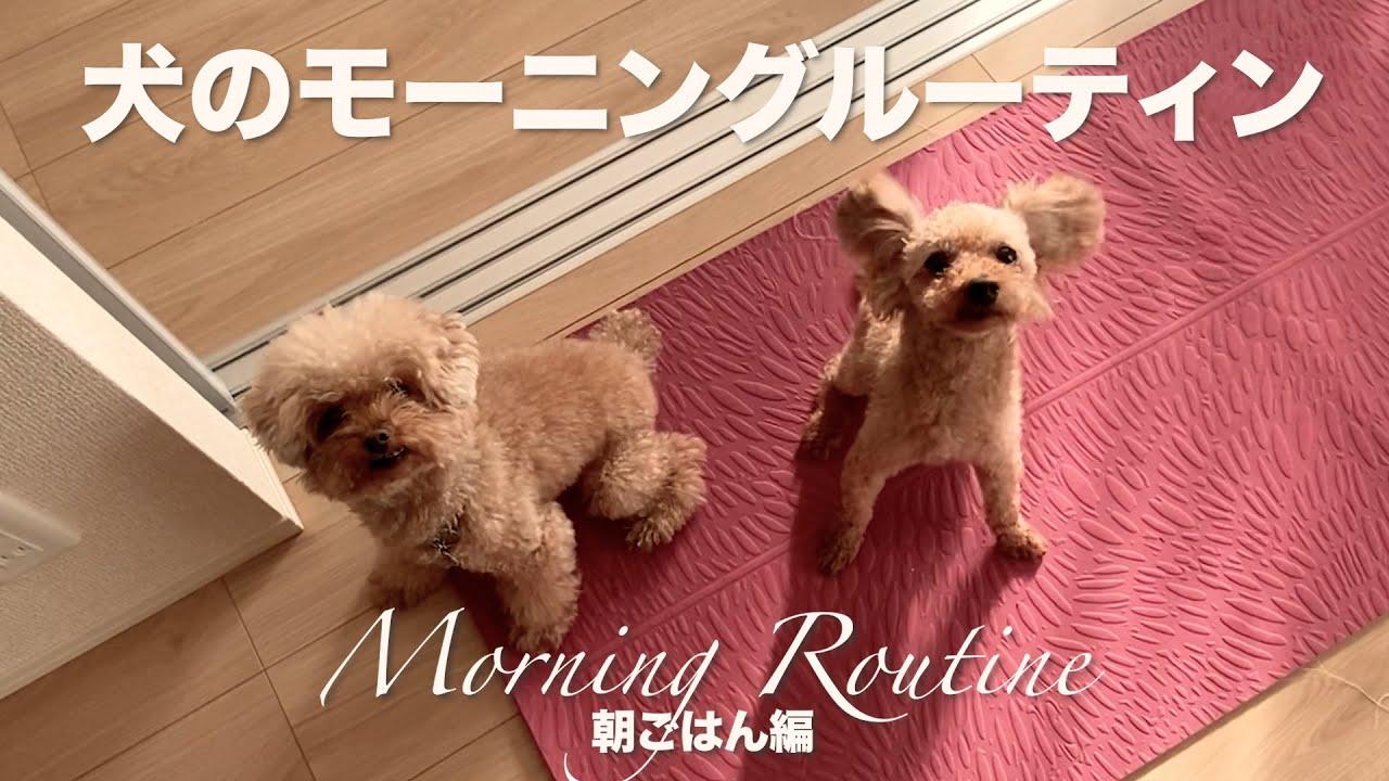 犬たちのモーニングルーティン〜真似する保護犬が可愛すぎる。朝ごはん編〜【Day11】