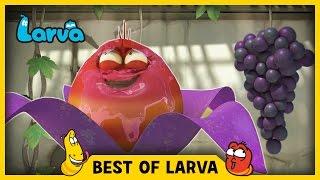 larva  best of larva  funny cartoons for kids  cartoons for children  larva 2017 week 19