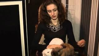 видео судороги у кролика что надо делать