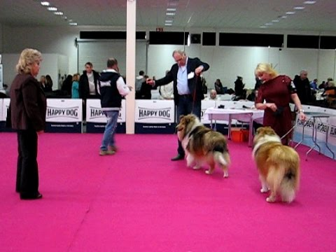 Dog Show Nitra 15.01.2017 ROUGH COLLIES - males [1of2]