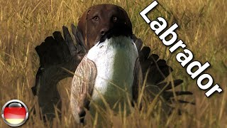 "Jagen Mit Fape Sp #8 - ""labrador Retriever"" 1/2 Deutsch/german [hd]"