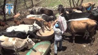 Alimentando a los barbaros de rancho la mision